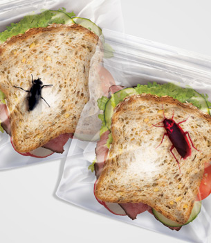 Bug Lunch Bags